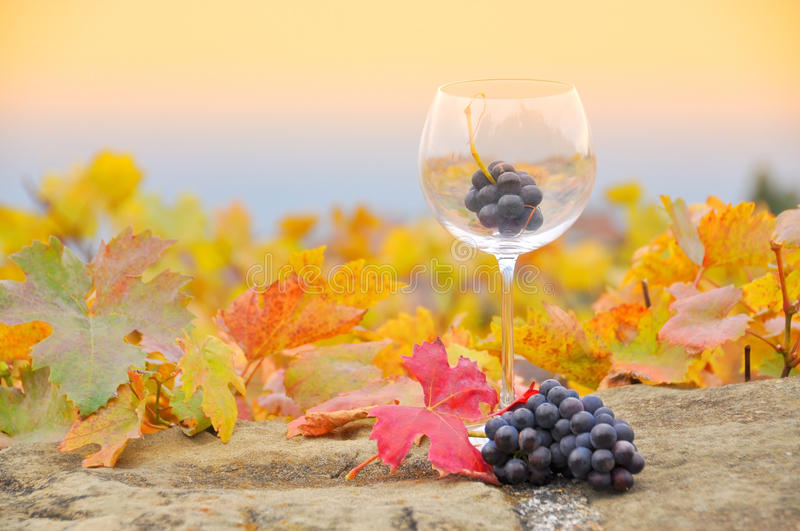Download Grapes in the glass stock image. Image of farmland, france - 34989353