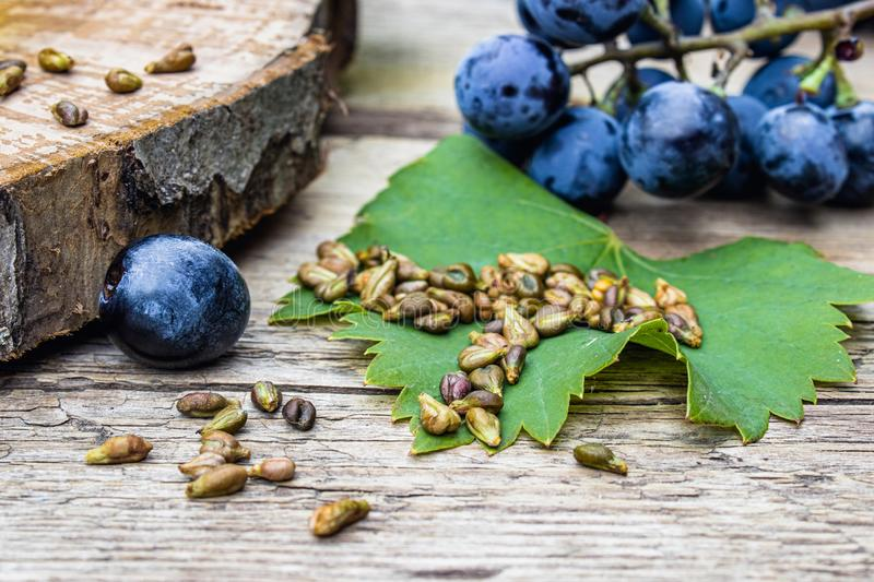 Grapes and grape seeds on a green leaf on old wooden boards. Blue grape. Spa, eco products concept royalty free stock photos