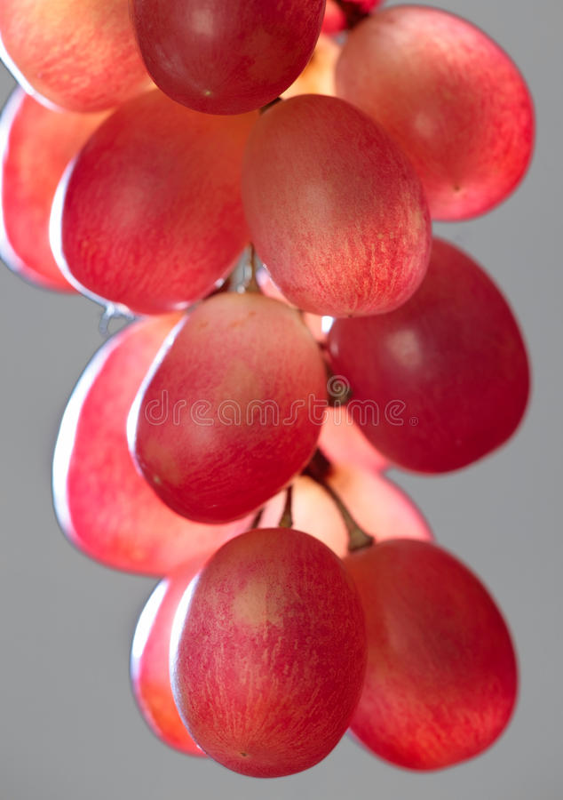 Grapes on gray. Red grapes on gray background stock images