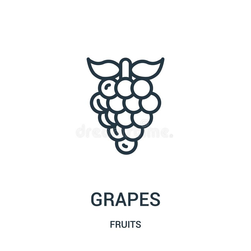 grapes icon vector from fruits collection. Thin line grapes outline icon vector illustration. Linear symbol for use on web and stock illustration