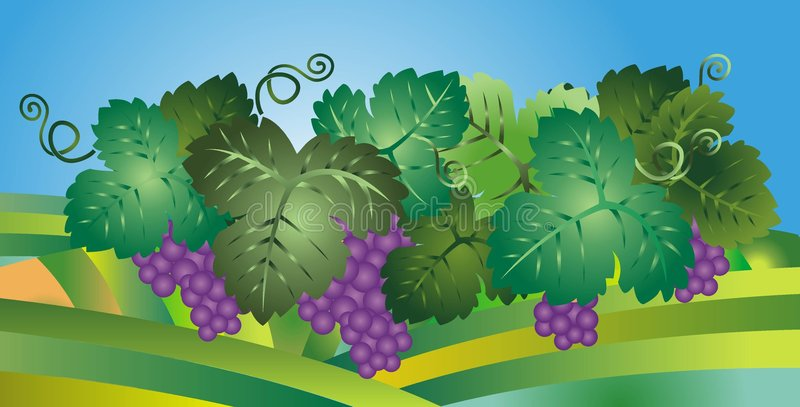 Download Grapes illustration stock vector. Image of wine, bunches - 9323200
