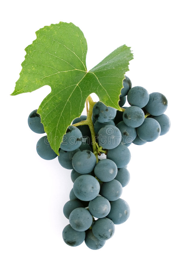 Grapes and leaf. For red wine stock images