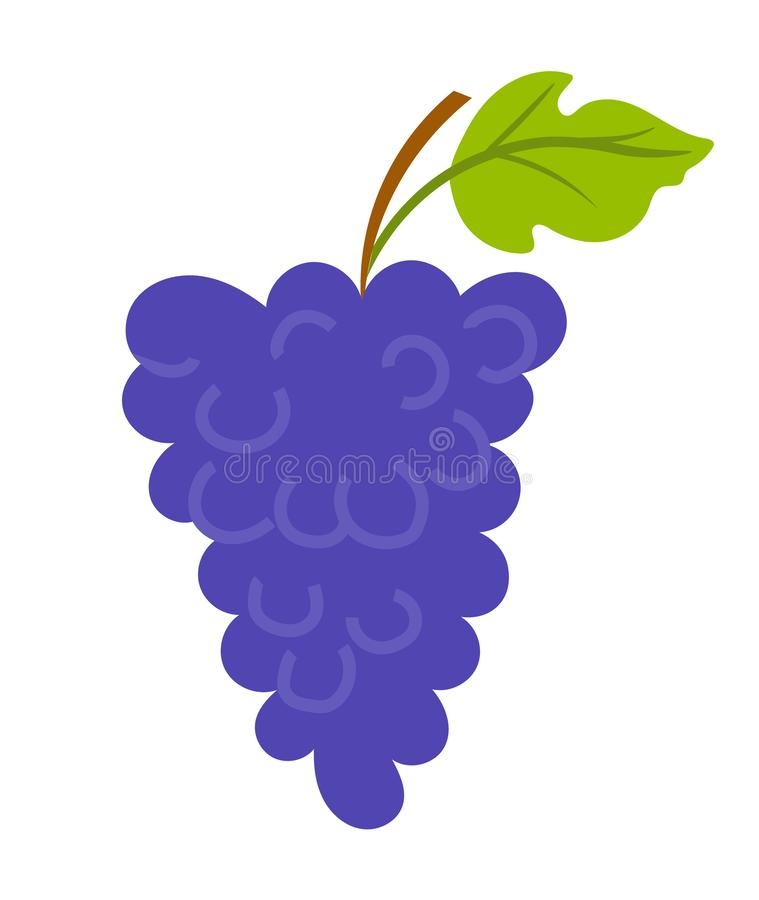 Grapes with Leaf and Wooden Stick, Vineyard Vector. Vineyard with leaf, purple seedless bubo, viticulture element of decoration. Grapes on wooden stick stock illustration