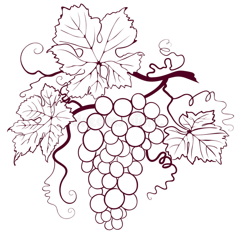 Grapes With Leaves. Editable vector illustration