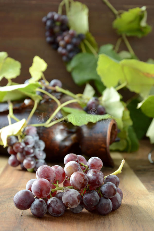 Grapes with leaves. Bunch of wine grapes(uva fragola) with leaves in the background royalty free stock photography