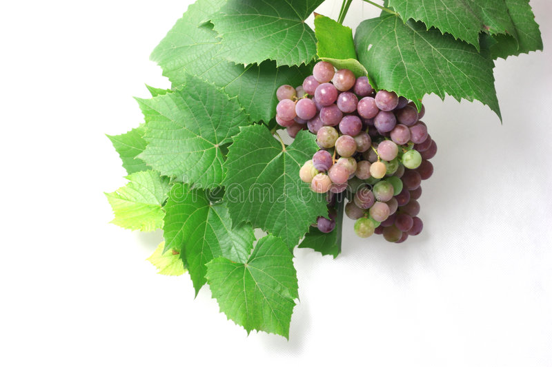Grapes for manufacture Fault stock photos