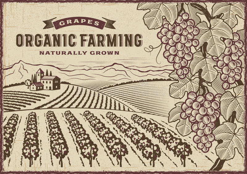 Grapes Organic Farming Landscape. Vintage organic farming label on grapes harvest landscape. Editable EPS10 vector illustration in woodcut style with clipping vector illustration