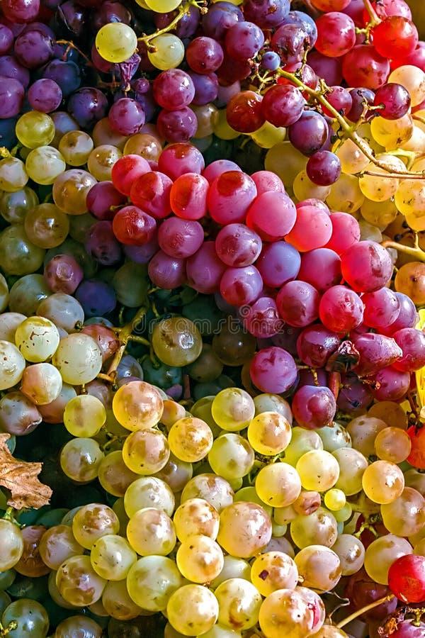Download Grapes stock image. Image of grapevine, purple, grape - 34472699
