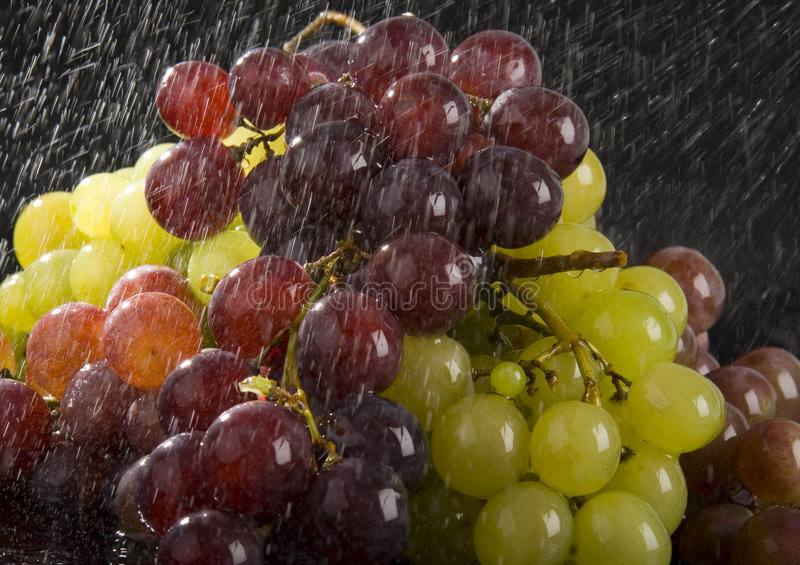 Grapes in the rain stock images