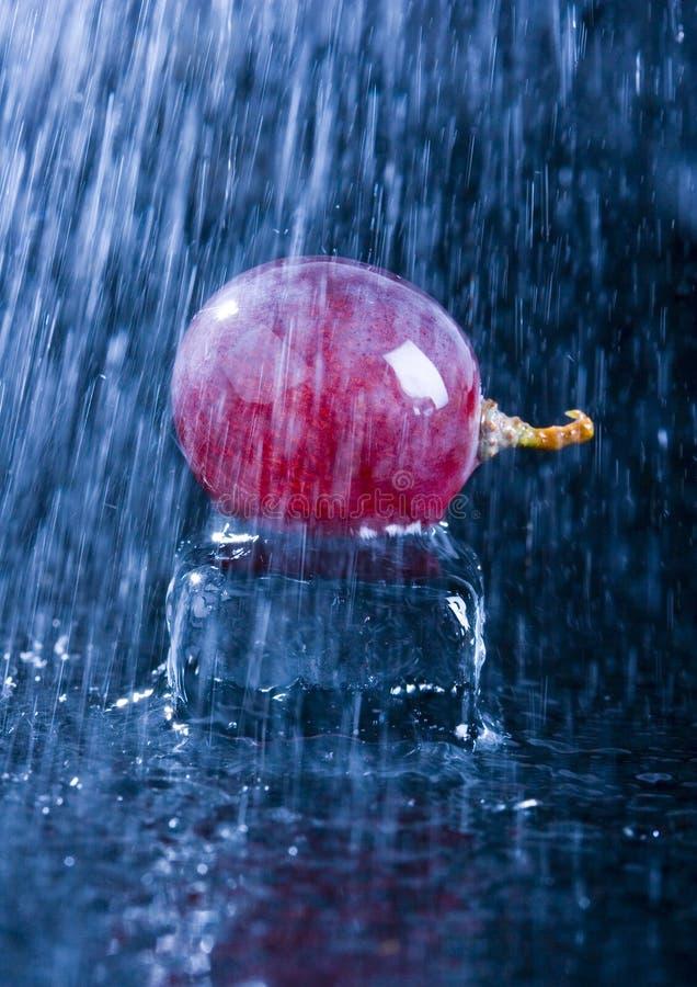 Grapes in the rain stock photo