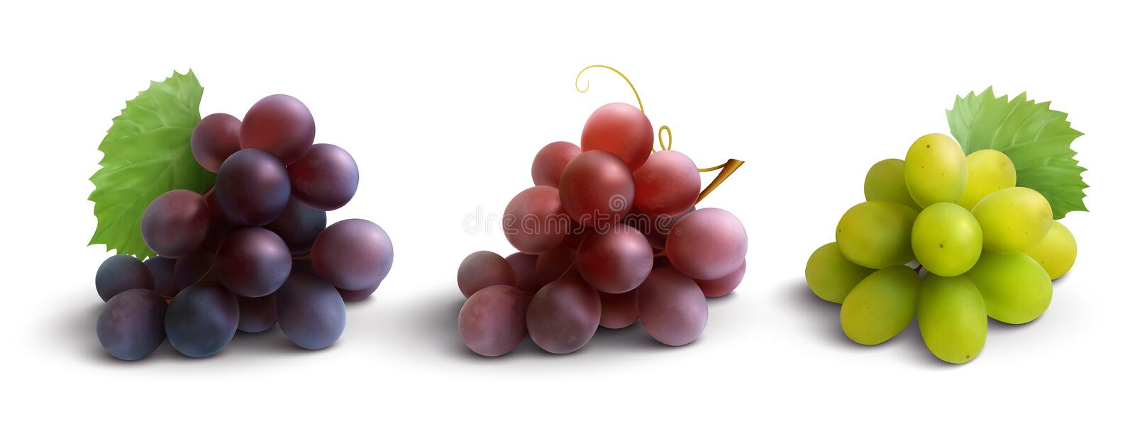 Grapes Realistic Composition. With red rose and white grapes isolated vector illustration vector illustration