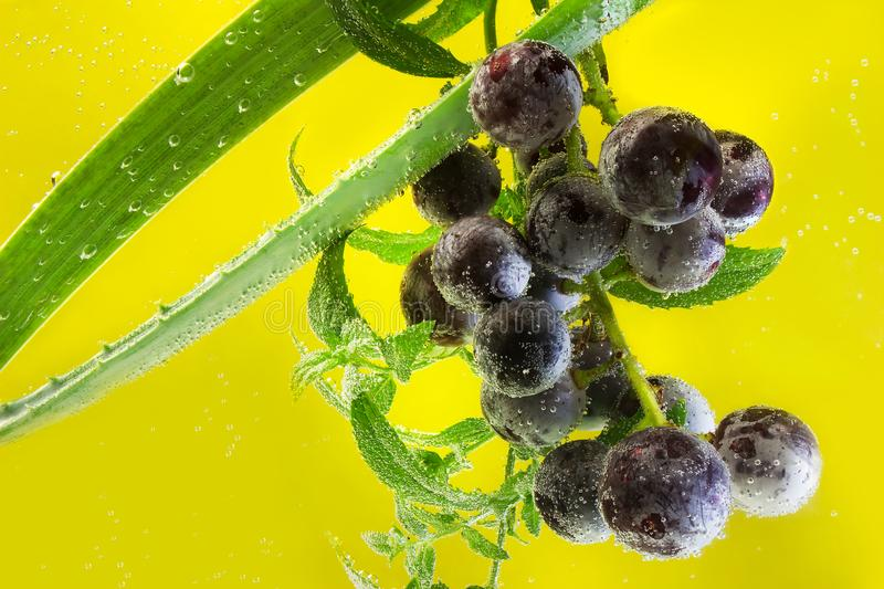Grapes in sparkling water. stock image