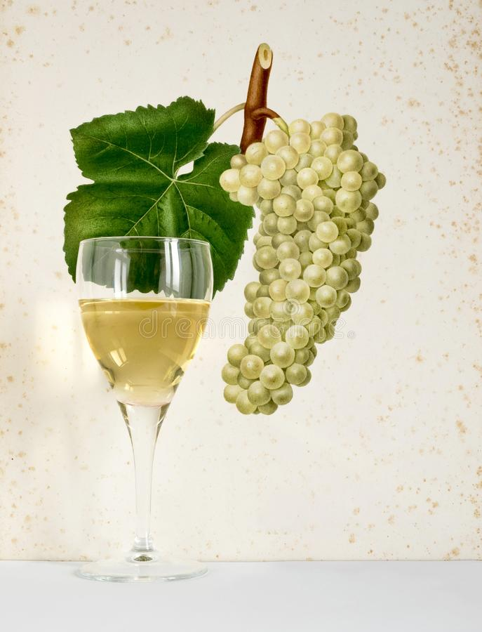 From grapes to wine glass stock photos