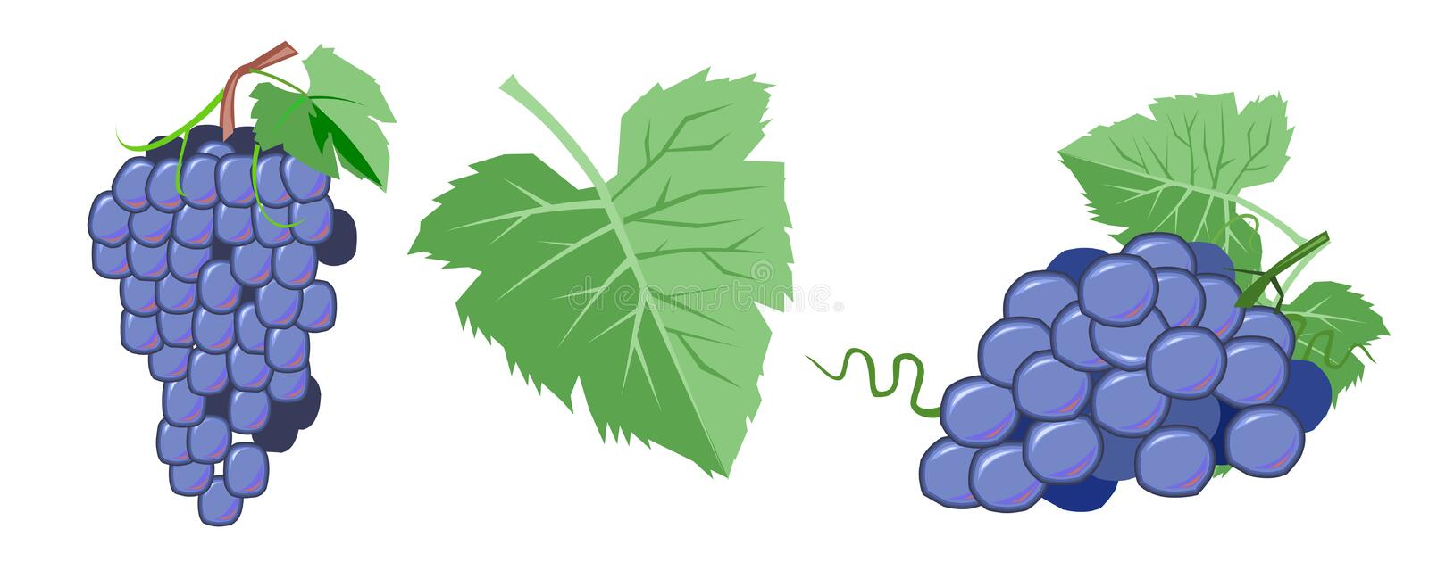 Grapes Vector. Bunches and leaves of grapes in cartoons flat style. Isolated objects on a white background stock illustration