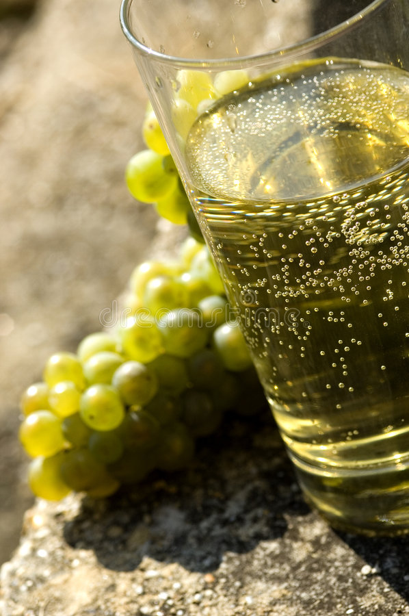 Grapes with vine royalty free stock photos