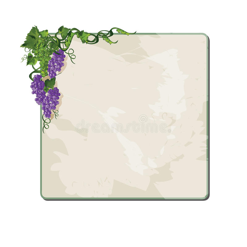 Grapes on vine. Grapes on vine with frame. Eps10. Vector royalty free illustration