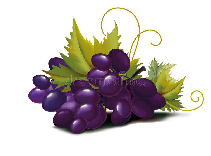 Download Grapes violet stock vector. Image of healthy, natural - 21757235