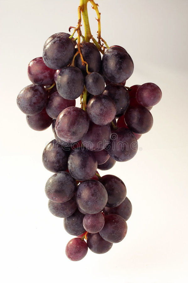 Free Grapes - Weintrauben Royalty Free Stock Photography - 472567