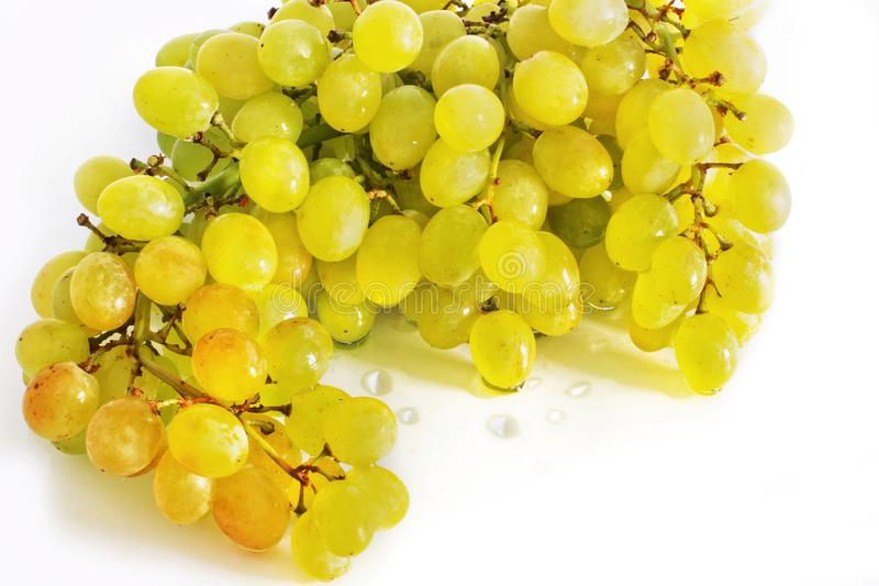 Grapes on a white background. stock photos
