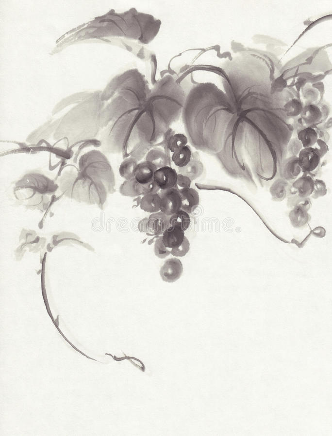 Grapes on white background ink painting. Chinese traditional ink painting, grapes on white background vector illustration