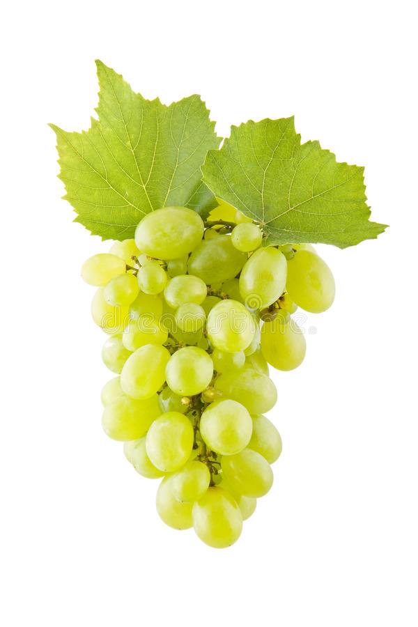 Grapes on white. Bunch of green grapes isolated on white royalty free stock image