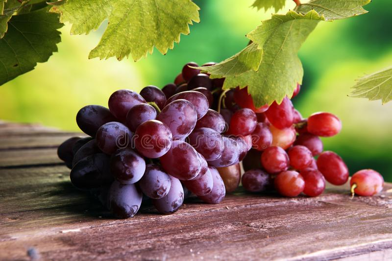 Grapes on wooden table and grape leaves . Healthy fresh fruit wine grapes. royalty free stock photo