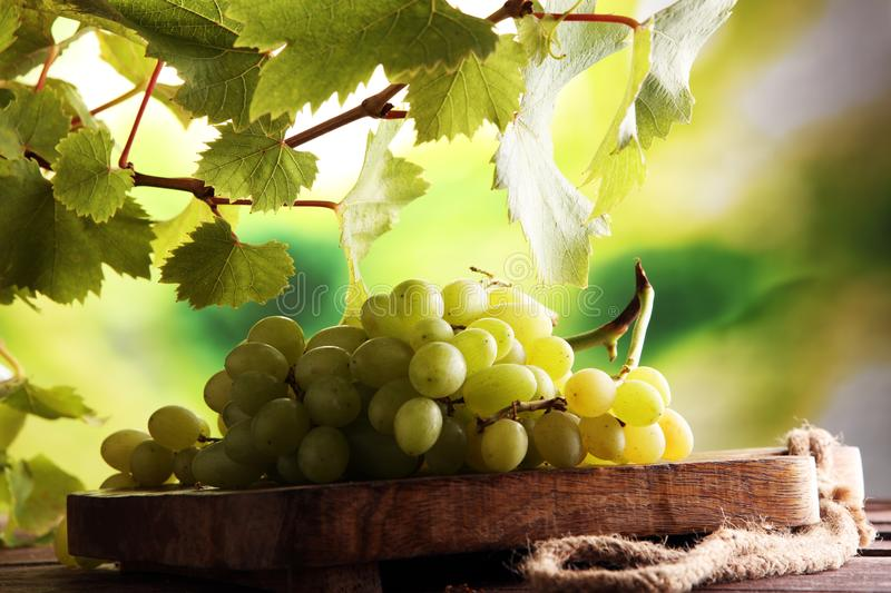 Grapes on wooden table and grape leaves . Healthy fresh fruit wine grapes.  stock images