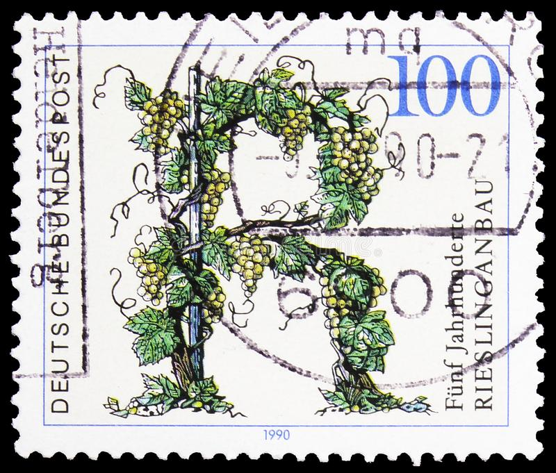 Grapes, 500 Years of Riesling Grape Cultivation serie, circa 1990 royalty free stock photos