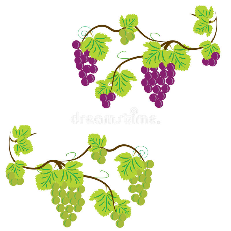 grapevine путь виноградин клиппирования пука включенный бесплатная иллюстрация
