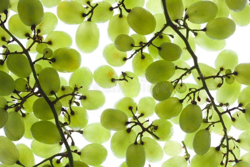 Download Grapevine stock photo. Image of plant, grapevine, vitamin - 19546446