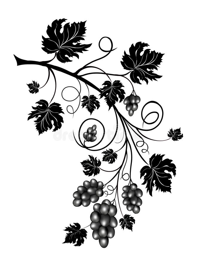 Download Grapevine stock vector. Image of black, food, leaves, plant - 9370635