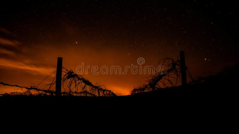 grapevine fires. stock images