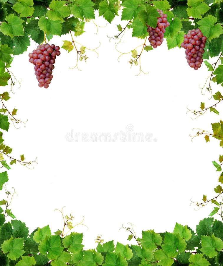 Grapevine frame with wine grapes royalty free stock images