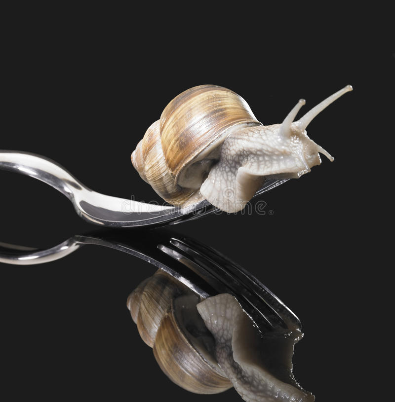 Download Grapevine snail on fork stock image. Image of biology - 25206401