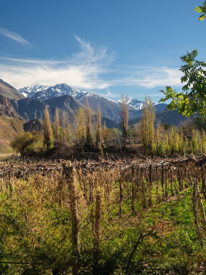 Grapeyard, vignoble Vall?e d'Elqui, pi?ce des Andes du d?sert d'Atacama dans la r?gion de Coquimbo, Chili photos libres de droits