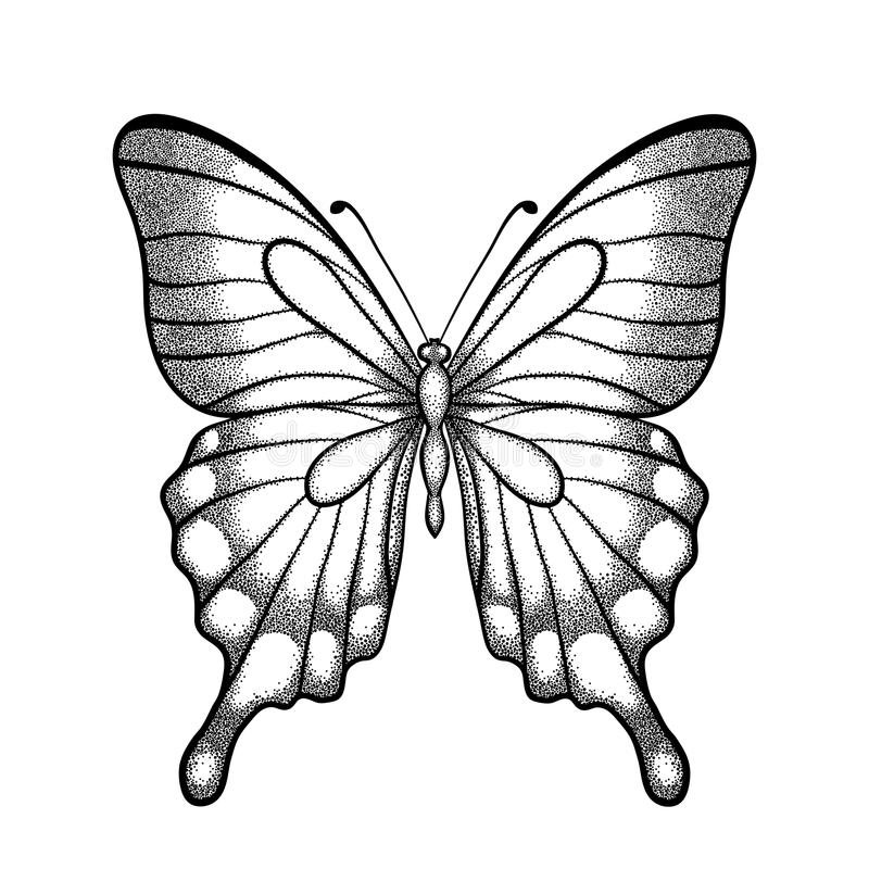 Contour Line Drawing Butterfly : Graphic black and white butterfly one isolated on