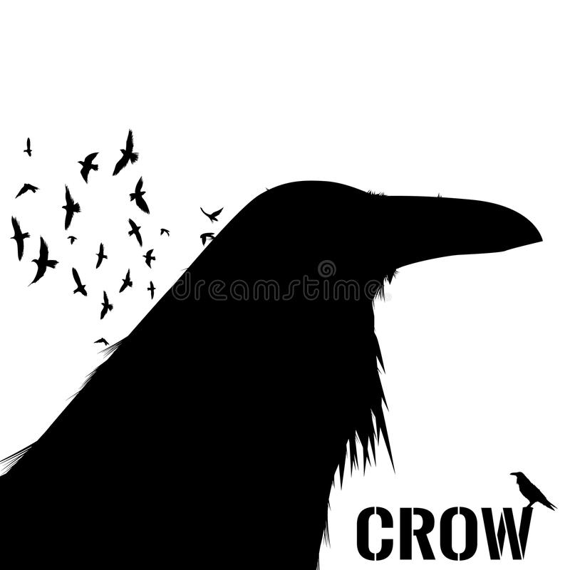 Graphic black and white crow isolated on white background. Old and wise bird. Raven Halloween character. vector illustration