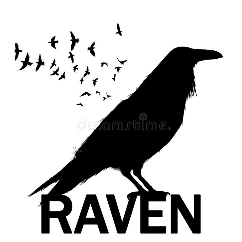 Graphic black and white crow isolated on white background. Old and wise bird. Raven Halloween character vector illustration