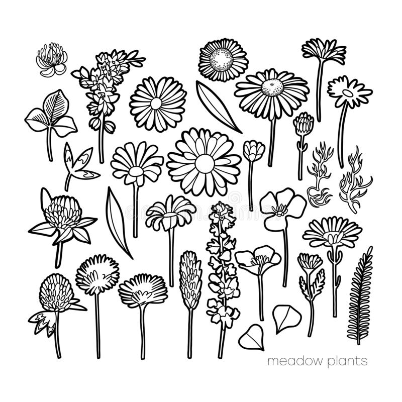 Graphic collection of wild meadow flowers isolated on white background vector illustration