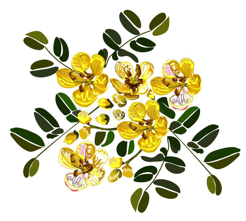 graphic design from cassia flower on white background stock illustration
