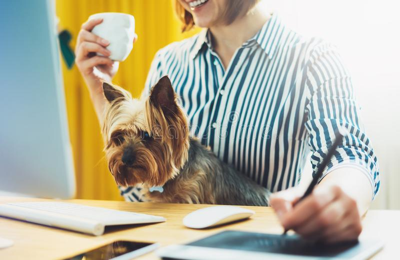 Graphic designer working at office with digital stylus on background monitor computer, smile hipster manager using pen with dog. Female hands graw on portable stock photo