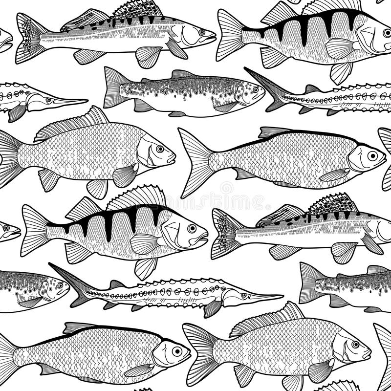 Graphic freshwater fish pattern. Graphic freshwater fish seamless pattern drawn in line art style. Sturgeon, roach, zander, trout, carp, perch for seafood menu royalty free illustration