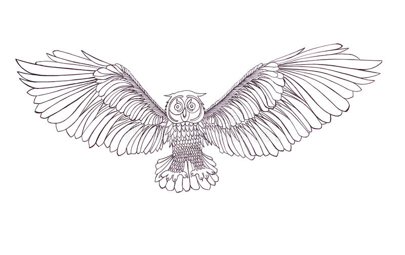 graphic illustration of flying owl black and white style