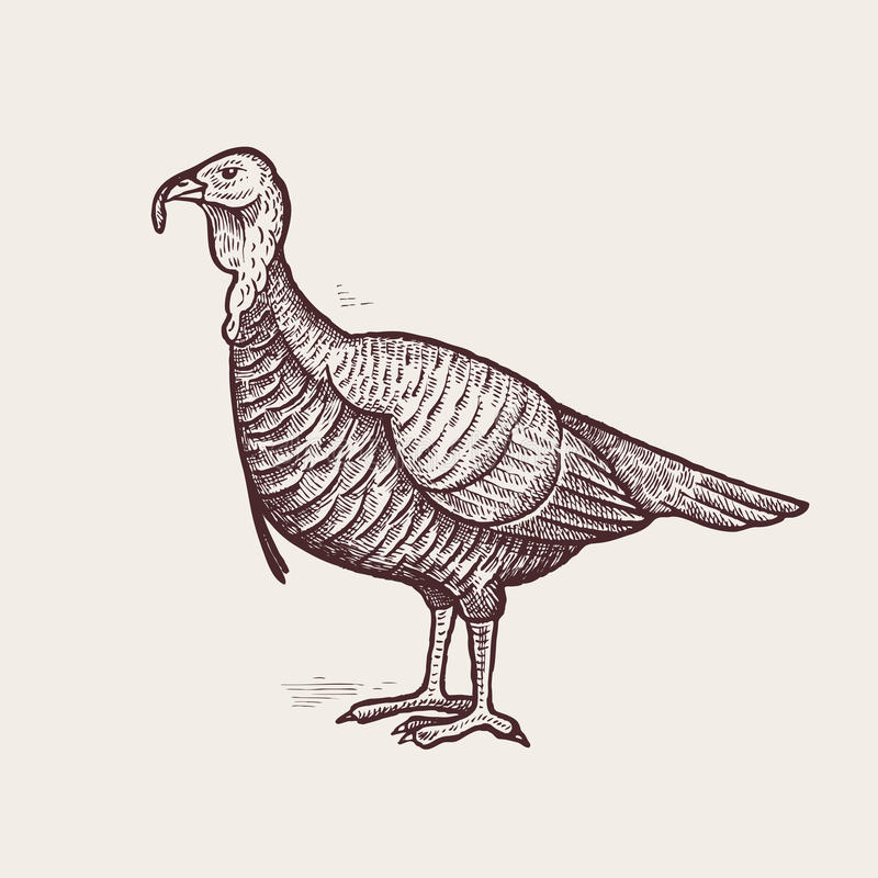 Graphic illustration - poultry turkey. stock illustration