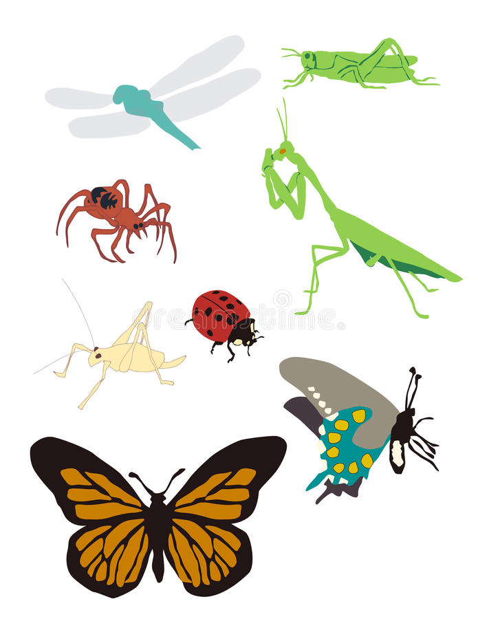 Graphic Images of Bugs Spiders Butterflies. Graphic representations of popular North American bugs, spiders and butterflies royalty free illustration