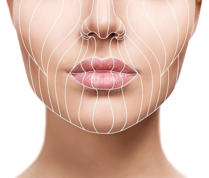 Graphic lines showing facial lifting effect on skin. royalty free stock photo