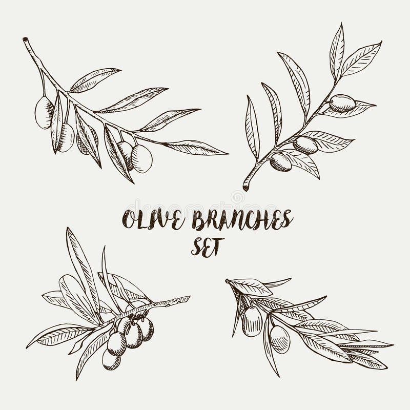 Graphic olive branches set. Vector illustration. royalty free illustration