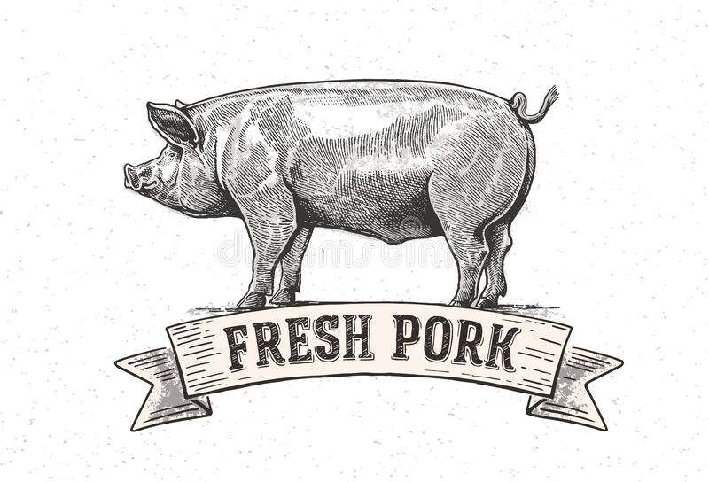 Graphic pig. Vector illustration drawn, by hand. Vector can be used as labels and packaging vector illustration