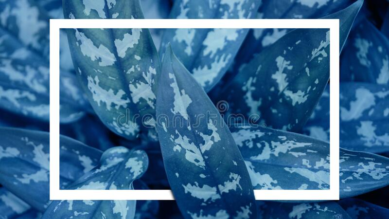 Graphic resource in trendy colors classic blue with white rectangle with copy space. Top view royalty free stock images