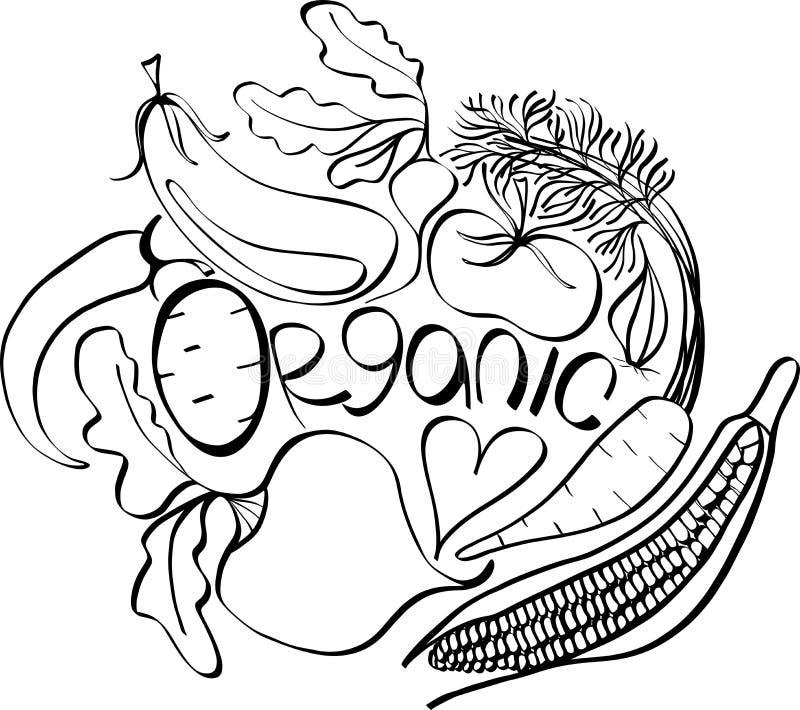 Graphic Scandinavian pattern of organic vegetables: potato, tomato, beetroot, shallot, eggplant, corn. Beautiful black&white graphic Scandinavian pattern of vector illustration